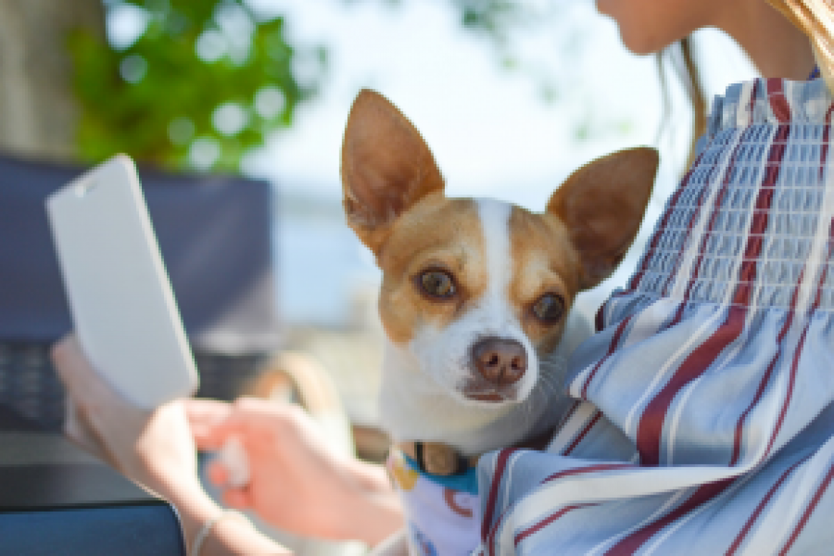 Building a Business and Bringing Home a Pet