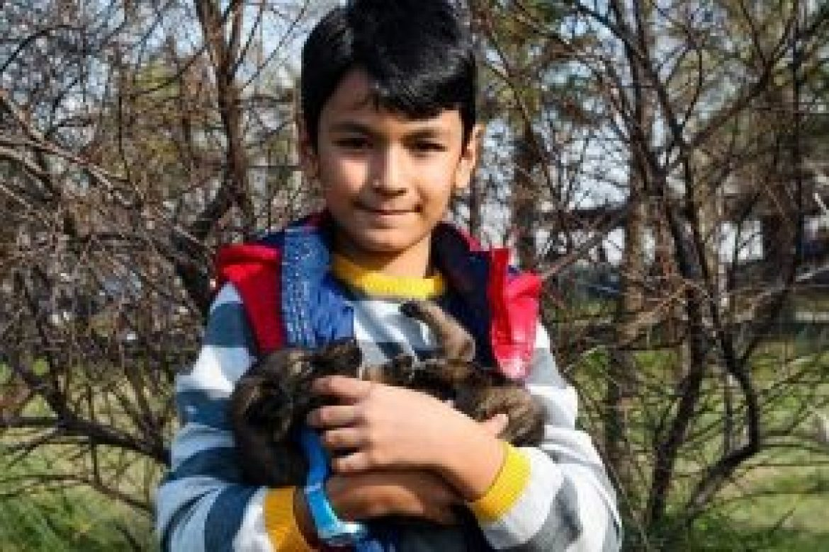 What to Consider When Getting Your Child a Pet